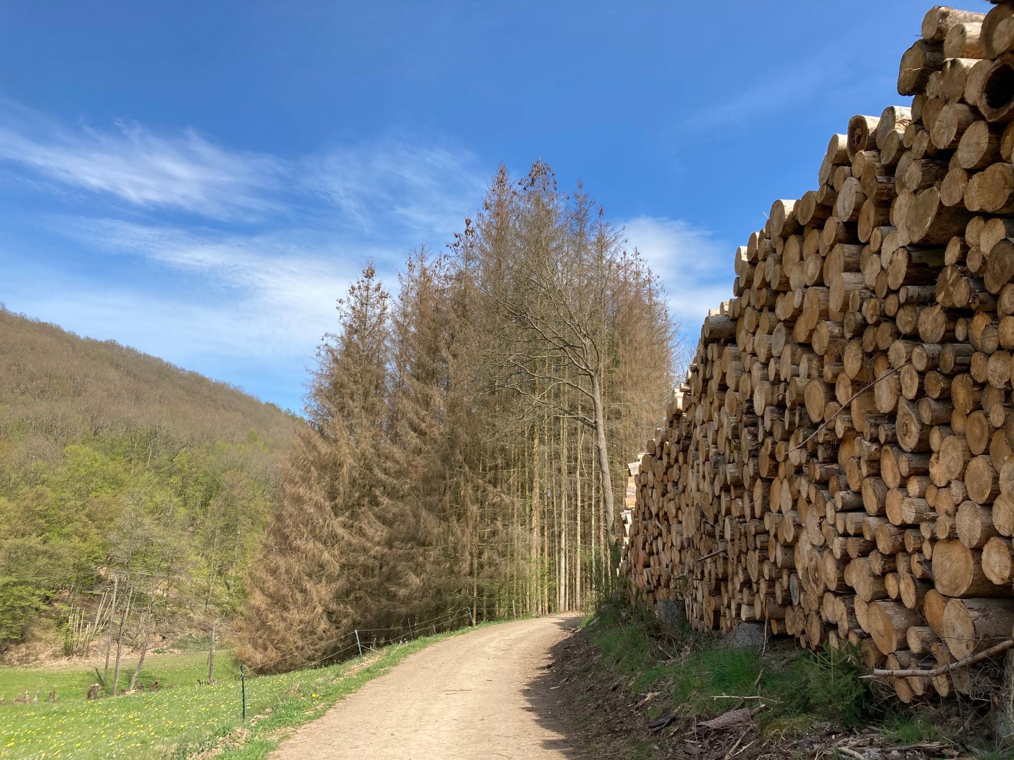 Wie gehts unseren Wäldern